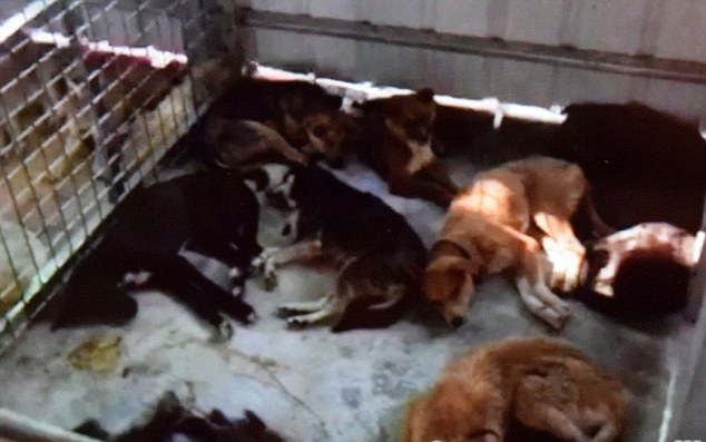 Dogs left dying at a Buddhist sanctuary after the Yulin dog rescue in June 2016 (2).JPG