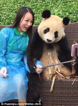 3c11d69800000578-4113442-this_panda_became_a_social_media_star_in_china_for_its_great_sen-a-80_1484229927005