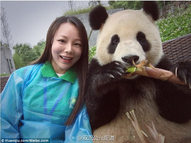 3c1211e500000578-4113442-nom_nom_the_bear_enjoyed_his_bamboo_while_taking_a_picture_with_-a-84_1484229957869